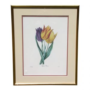 Vintage Framed Limited Edition Redoute Botanical Lithograph Langlois Old Mission Gallery